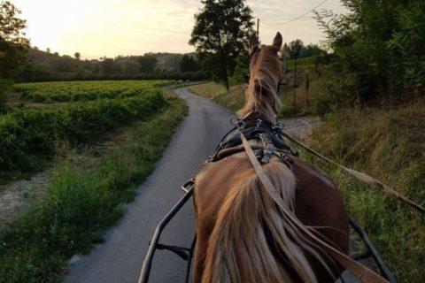 passeggiate-a-cavallo-04